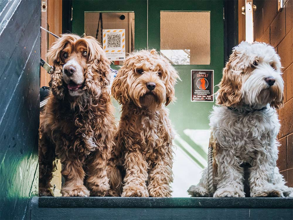 three dogs on the Bar's stairs